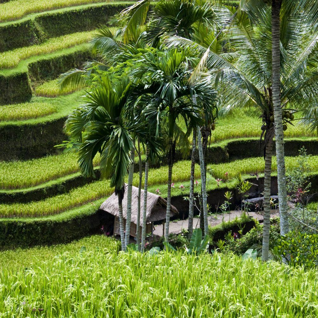 Tegalalang | Voyage Bali Indonésie en Circuit Privé avec Guide Francophone