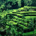 rizières-en-terrasses-Tegalalang-Ubud-Voyage_Bali-iBali