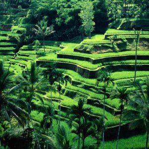 les rizières de Tegalalang | Voyage Bali Indonésie en Circuit Privé avec Guide Francophone