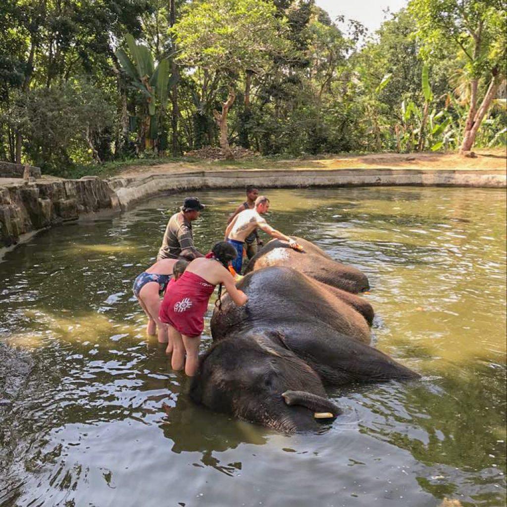 Baignade avec les elephants à Bali | Voyage Bali Indonésie en Circuit Privé avec Guide Francophone