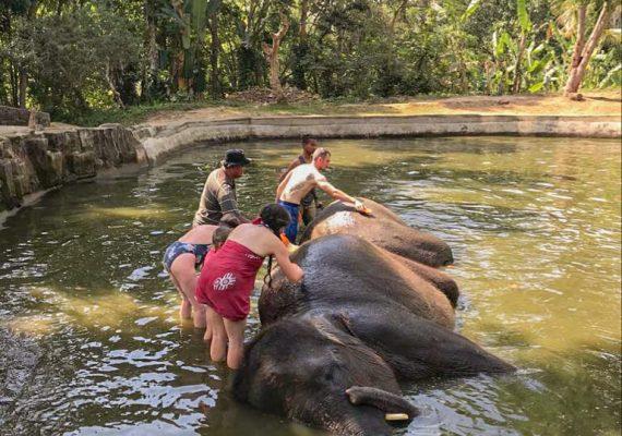 baignade avec les elephants sumatranais a Bali