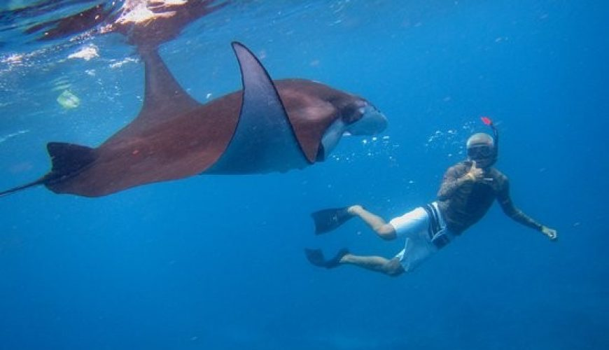 Snorkeling Nusa Penida Ray Manta   Voyage Bali Indonésie en Circuit Privé avec Guide Francophone